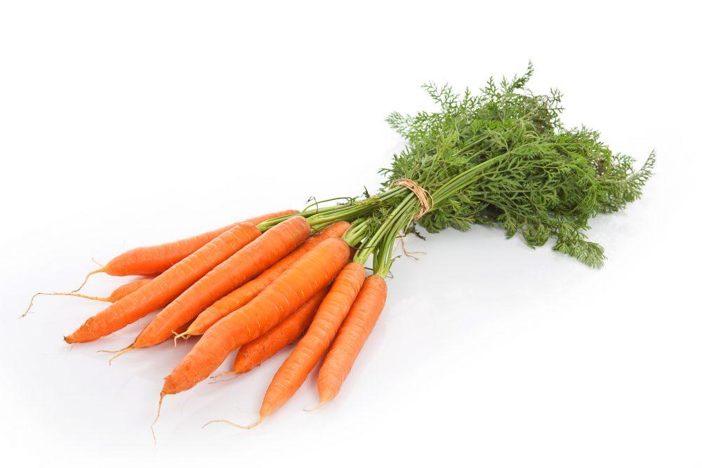 Karottenbund Möhren